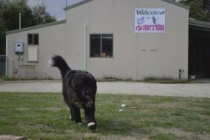 Gippsland Paws and More-40